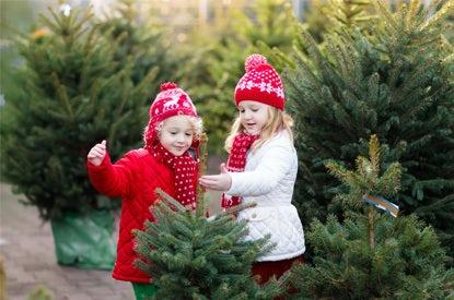 Kerst Echte Kerstbomen
