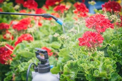 Mijn Tuin Bestrijding En Afweer Plantenbescherming