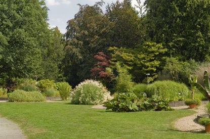 Mijn Tuin Tuinplanten Heesters En Bomen