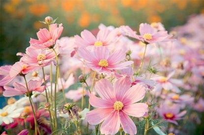 Mijn Tuin Zaden Bloemenzaden