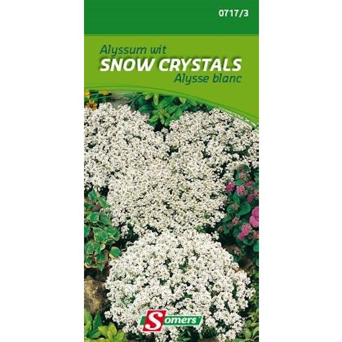 Alyssum wit Snow Crystals