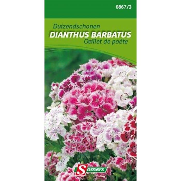 Duizendschoon Dianthus barbatus