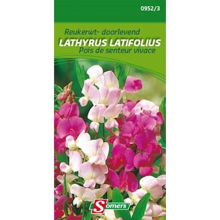 Reukerwten doorlevende Lathyrus