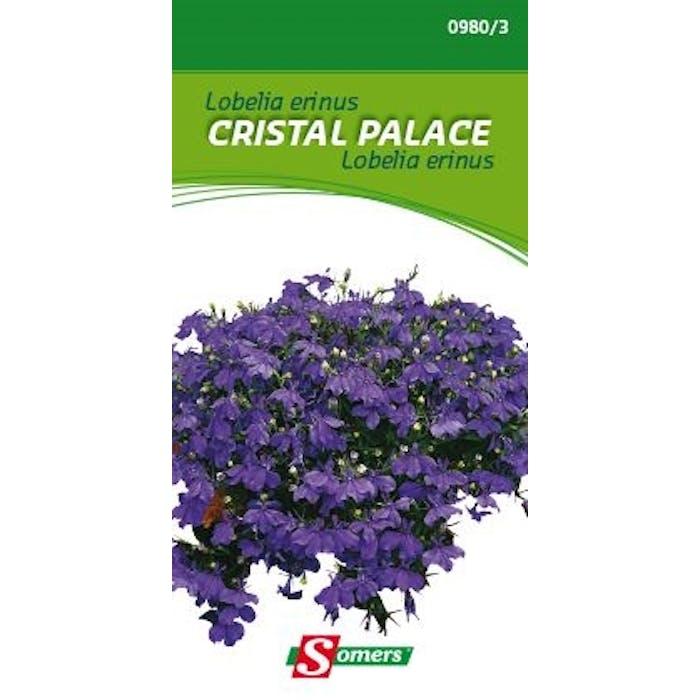 Lobelia erinus Cristal Palace