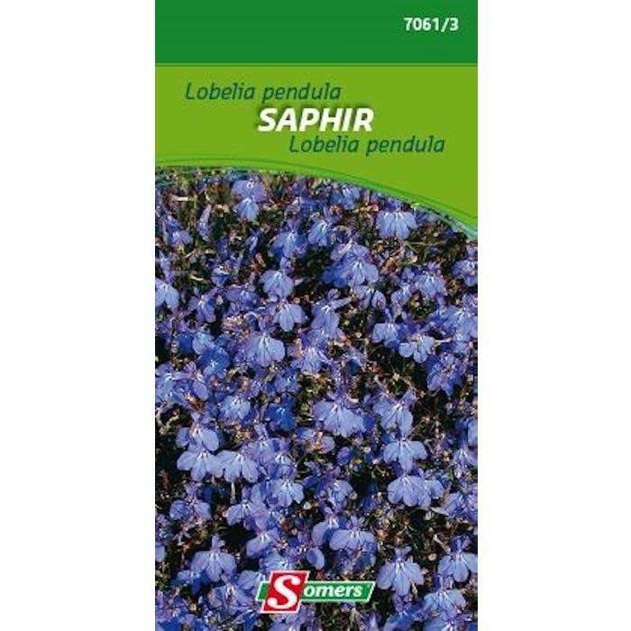 Lobelia pendula Saphir
