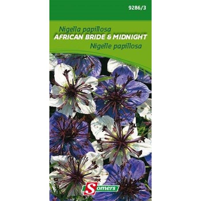 Nigella papillosa African Bride
