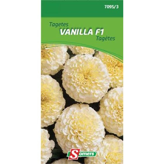 Tageten Vanilla F1