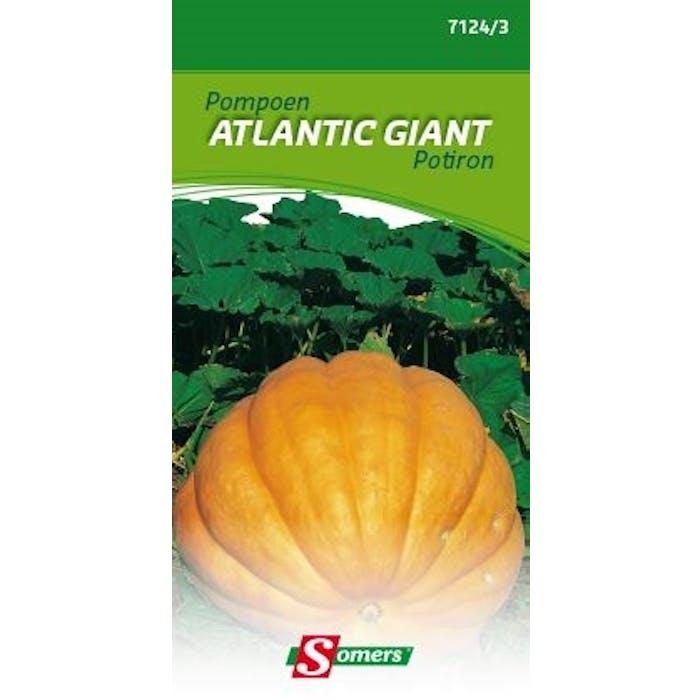Pompoen Atlantic Giant
