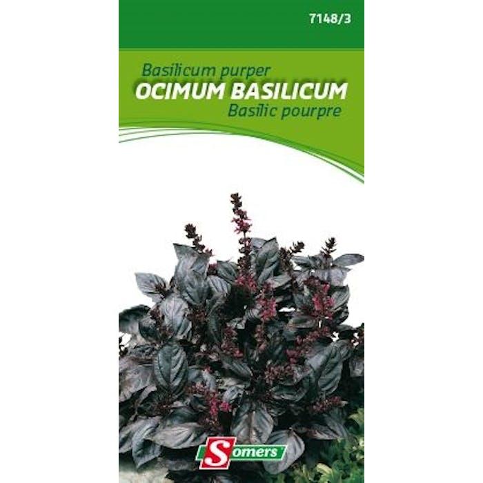 Basilicum purper