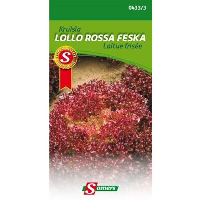 Krulsla Lollo Rossa Feska