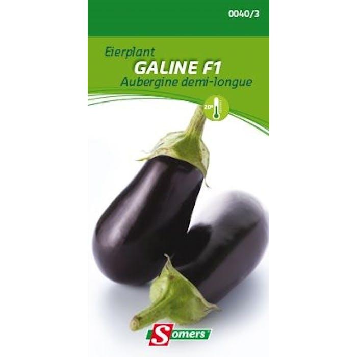 Aubergine Galine F1