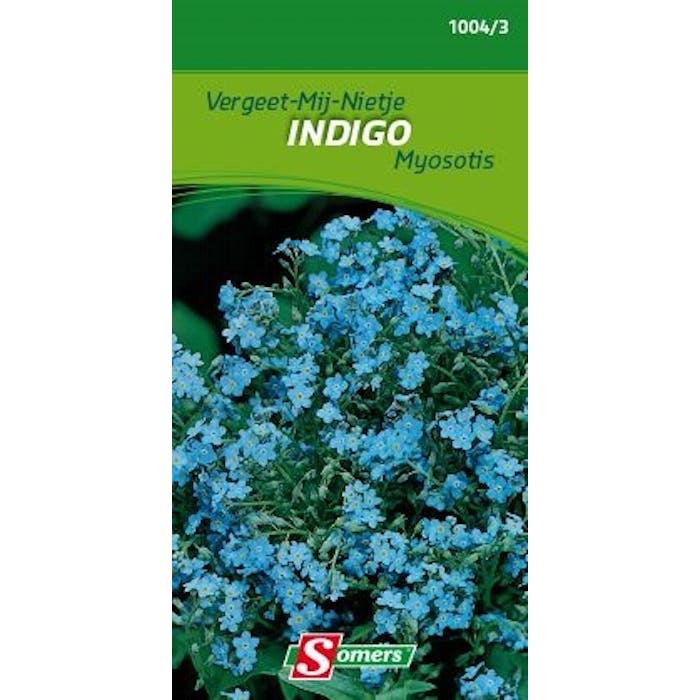 Myosotis Indigo