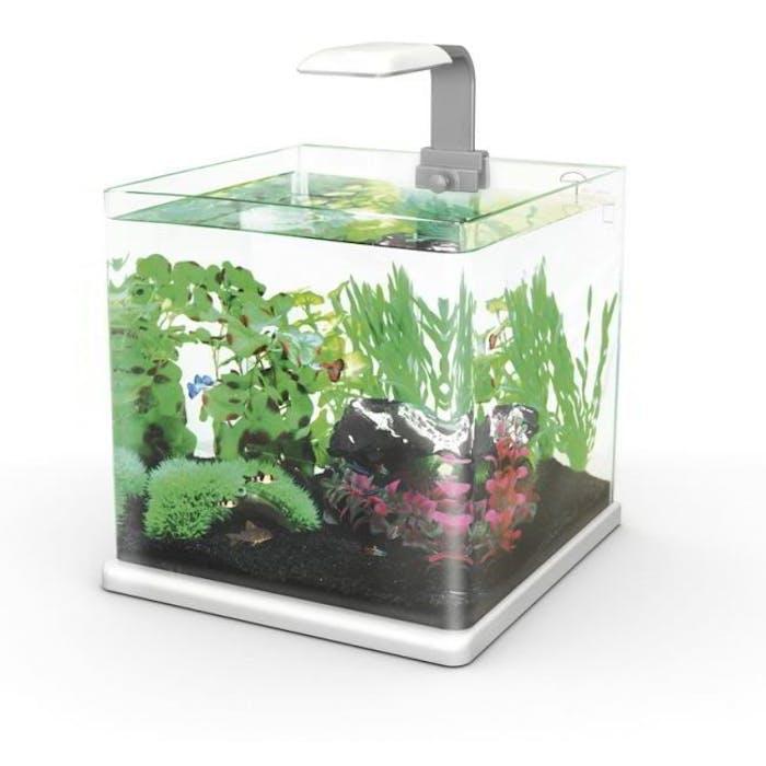 Aquarium - Qubie 25 wit