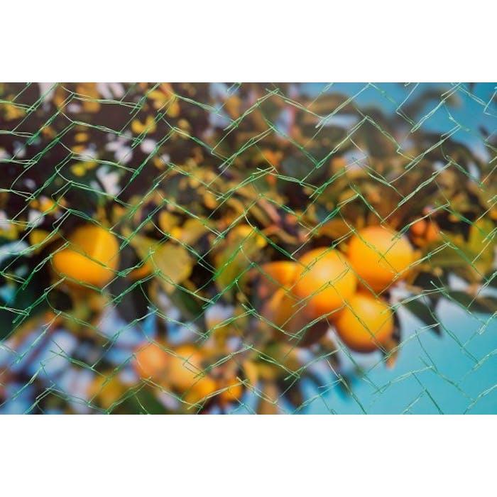 Fruitboomnet mono 8x8 m
